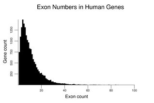 Exon Numbers in Human Genes